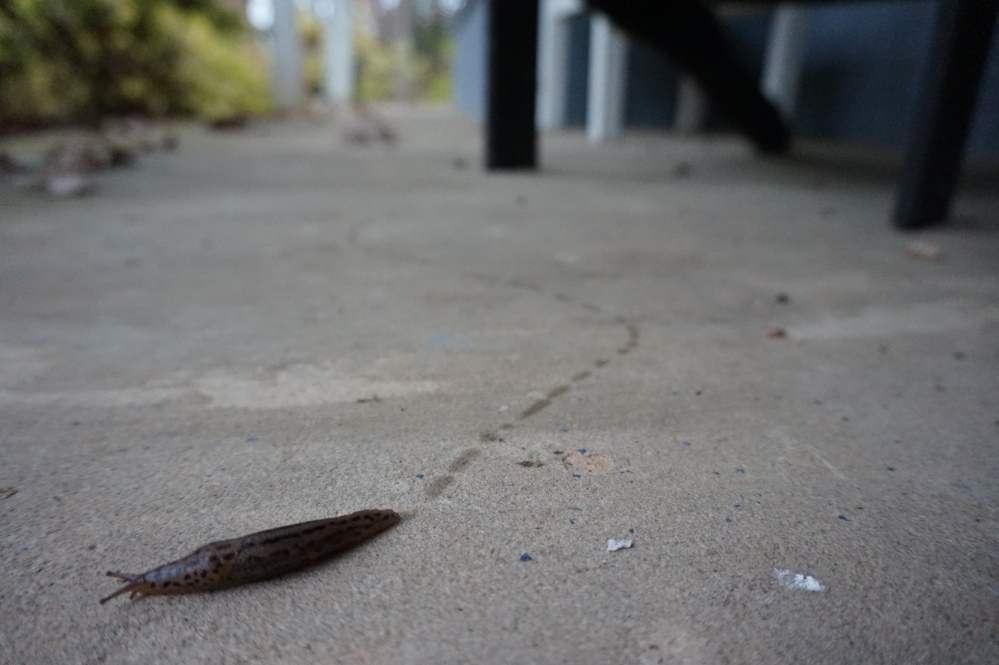 Reston Tails
